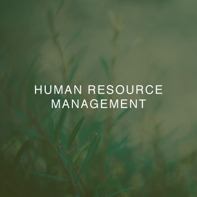 01-two-birds-human-resource-management